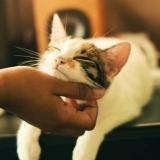 Macska simogatás