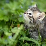 Kiscica a kertben