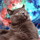 Kvantum macska