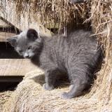 Vidéki macska